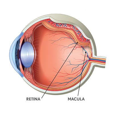 ocuvite-complete-eye.png#asset:1933